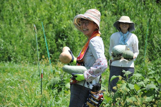 固定種 在来野菜 野菜づくり教室 農業体験