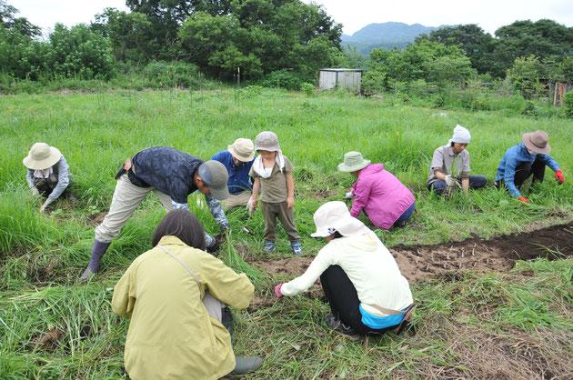 自然栽培のエシャレット@すどう農園・さとやま農学校