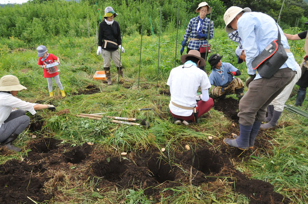 自然栽培 ジャガイモ 農業体験 野菜作り教室