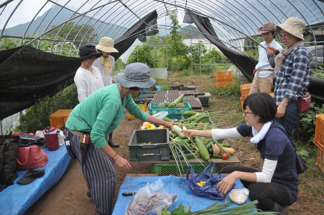 固定種 自然栽培 農業体験 体験農場 野菜作り教室 オーガニック栽培