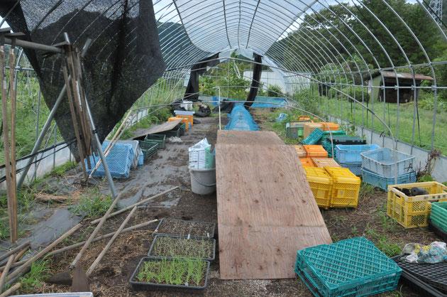 自然栽培 苗づくり 固定種