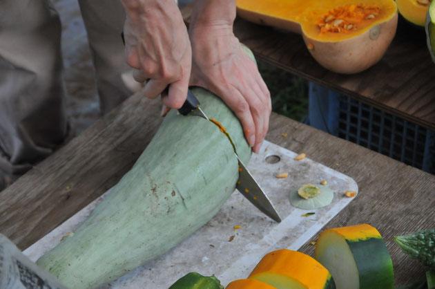 カボチャ 固定種 在来種 種取り 自然栽培 農業体験 野菜作り教室