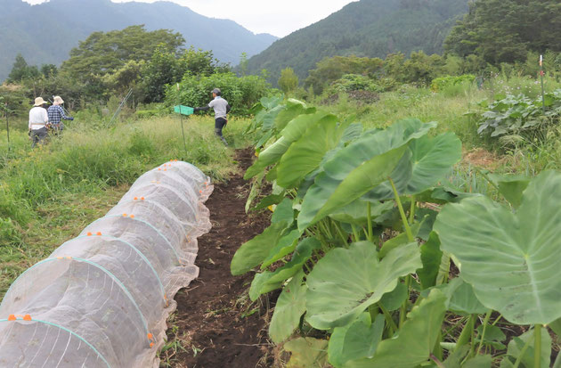 体験農場 農業体験 野菜作り教室 自然栽培 固定種
