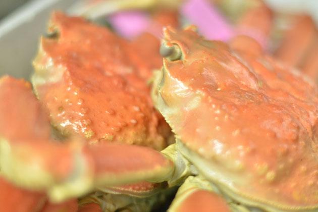 藤右エ門南店 本店では、山陰産のタグ付きの蟹を使用しています。