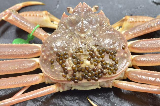 蟹料理ご案内