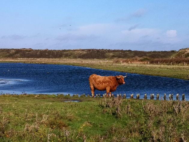 Die Inselausflüge auf Langeoog sind immer ein Erlebnis...