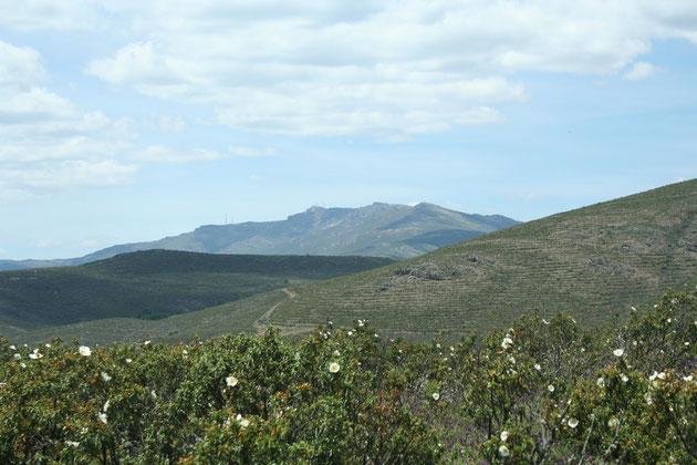 Sierra del Alto Rey al fondo