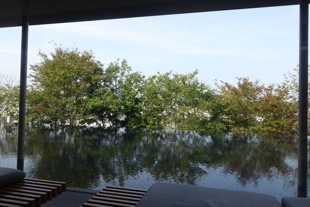 広縁から眺める水庭と植栽