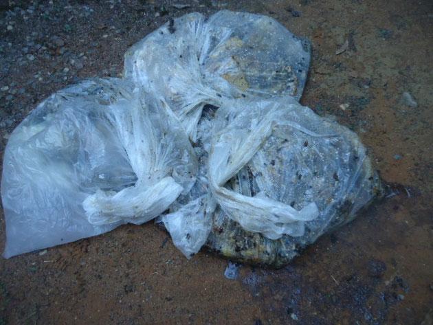 回収した巣は90リッターの袋で3つでました。