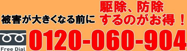 シロアリの被害が大きくなる前に!フリーダイヤル0120-060-904お電話ください!!
