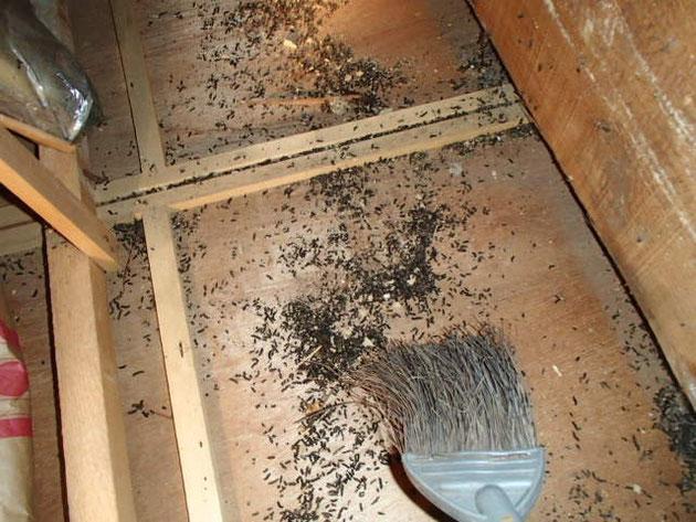 コウモリ糞清掃中