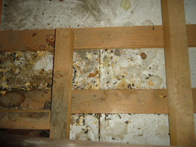 ネズミ糞尿被害