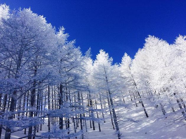 じゅじゅじゅ樹氷が…すごい…