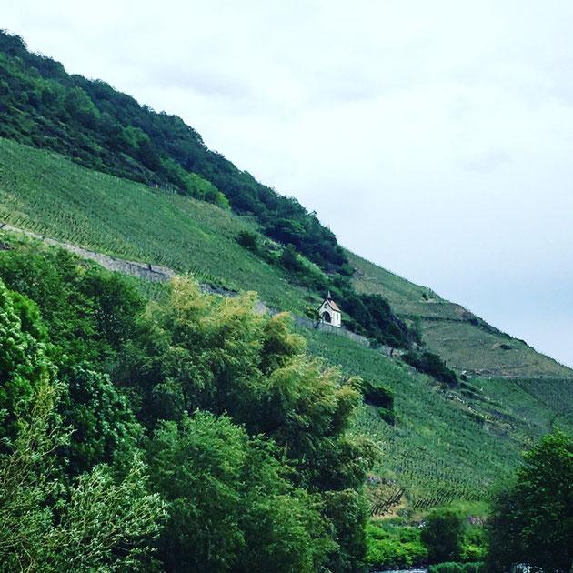"""Parcourir et déguster un grand terroir  : Le Rangen de Thann  - """"Au fond du verre, je veux retrouver le paysage du lieu où je suis"""" Jacques Puisais"""