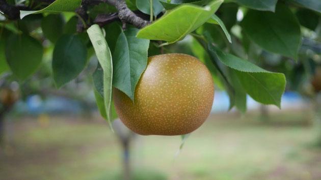 農家の方々が、丹精をこめて育てた野菜や果物をベストな状態で消費者の皆さまへ届けるために、品質保持エアセルは大きな貢献を果たすことでしょう。