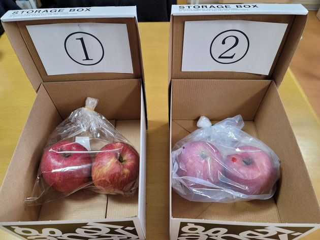実験一日目。右側がポリ袋に入れたりんご。左側が鮮度保持ポリ袋に入れたりんご。