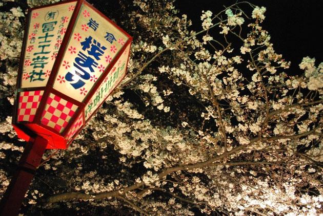 岩倉市の桜まつりへ、皆様ぜひお越しください。