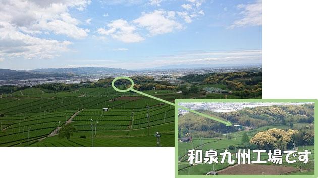 茶畑の彼方にある弊社九州工場。はい、すごく田舎です。 ※クリックで拡大します。