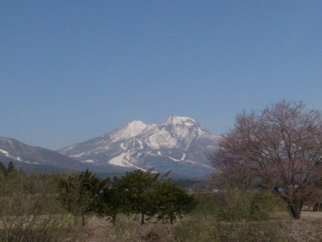 この桜いつ咲くのか?今年こそ撮ってみたい:信濃町鳥居川沿い