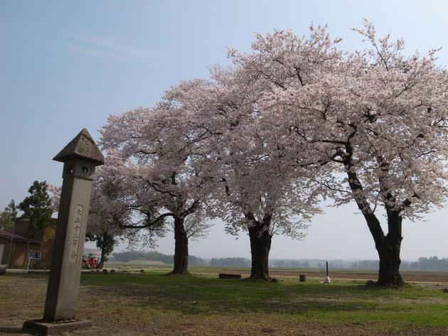 岡木神社:三本の大樹が村をみ見守り花が咲けば田植えの準備だ