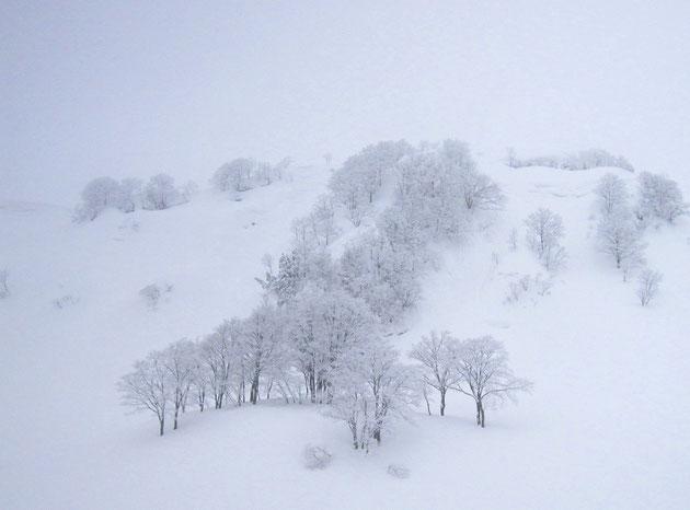 白雪 スキー場ゴンドラ終点には、美しい白の風景が広がる(菱ケ岳)