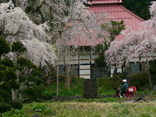 山里に春が来る郵便配達も気持ちがイイー事でしょう:信濃町川上曹源院