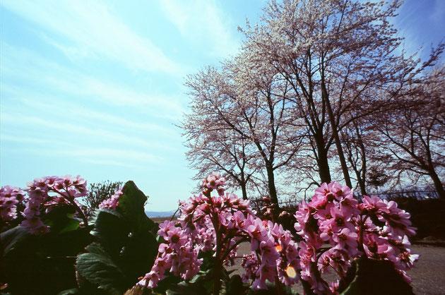 西松野木:田園の向こうに妙高が見える