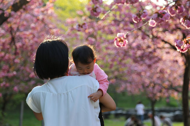 桜と母につつまれて   金子浩之 様
