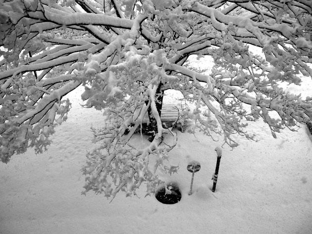 雪 降る雪を窓辺から眺め、雪の風情を楽しむ(N学院の校庭)