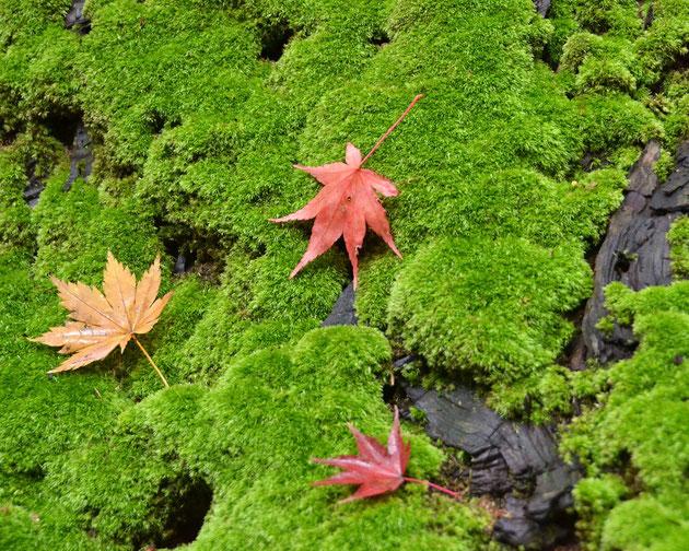 緑苔 瀧本邸、お宝の庭