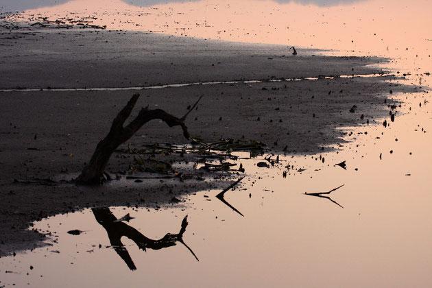 水辺 水が引けた池に静かな時が流れる、しばしものを思う(大潟・朝日池)