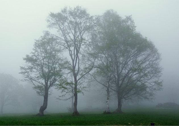 笹ヶ峰 突然の濃霧