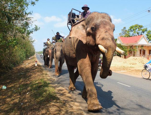 Arbeitselefanten begegnen uns noch häufig