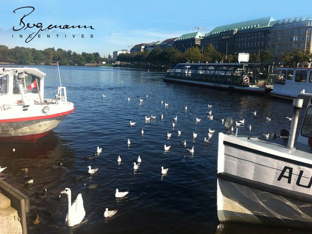 Hamburg Alster Lake - the white swan ..
