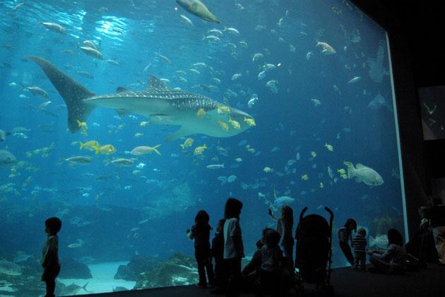 Atlanta Georgia Aquarium - ein Wal-Hai