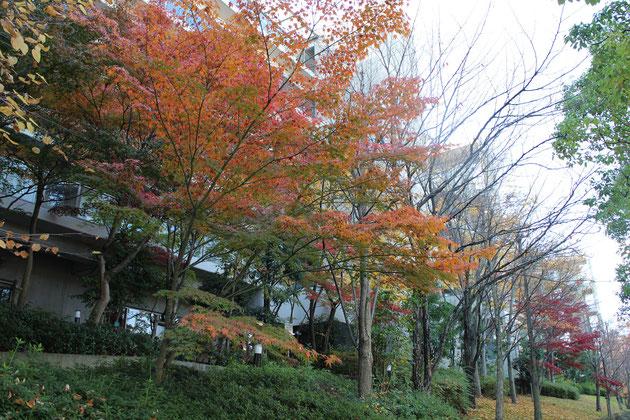 2014年秋の紅葉