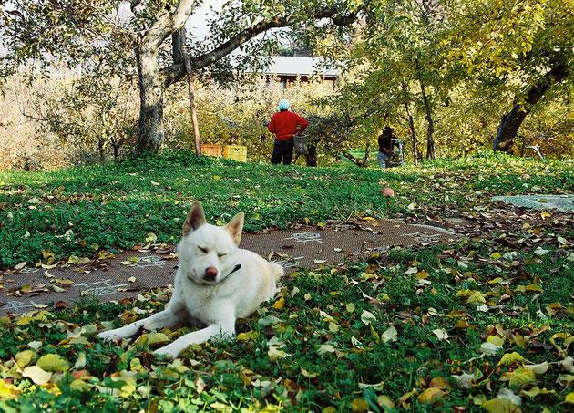 ぶどう狩りもペットOK農園はペット可、一緒にくだもの狩りしてワンちゃんも楽しい!