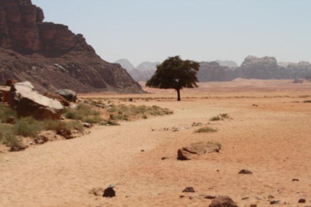 Der einsame Baum in der Wüste.