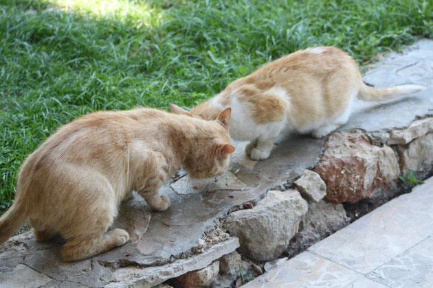 Zwei von unseren Pflegekatzen.