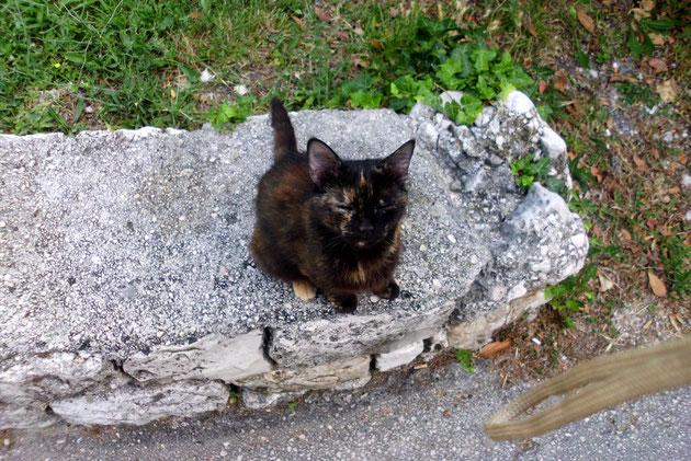 Noch einmal Blacky, die immer so einen traurigen Blick hatte Was mit ihren Jungen passiert ist, wissen wir nicht.Auch Katzen haben eine Seele.,