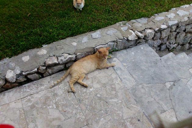 Eine ganz liebevolle Katzenmutter, die wir jeden Tag gefüttert haben  und ihren Kindern  immer Futter gebracht hat.