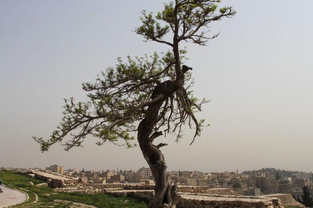 Amman hieß früher auch Philadelphia, nach dem griechischen Wort für Bruderliebe.