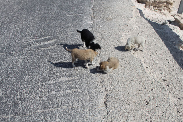 Niedliche Hundewelpen am Straßenrand