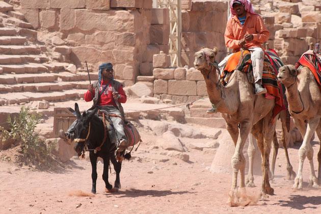 Esel kontra Kamele.