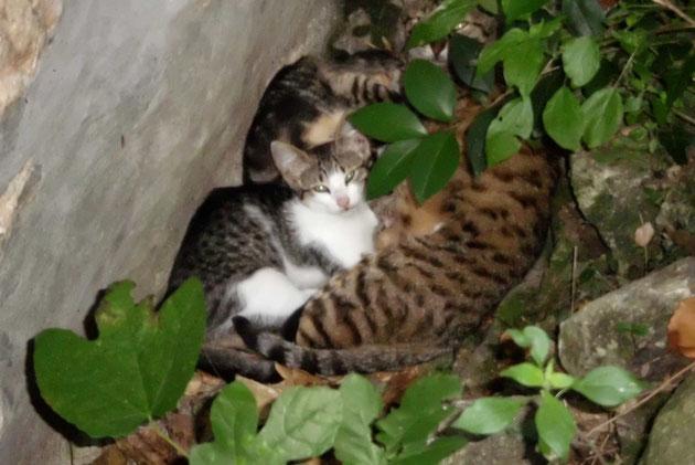 Sie hat schon wieder 2 kleine Kätzchen geboren.