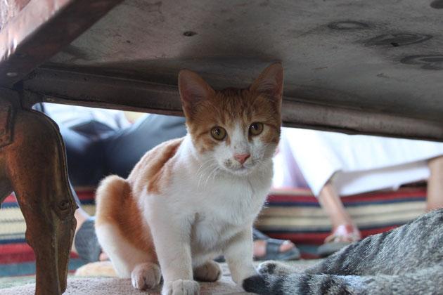 Katzen im Beduinenzelt.