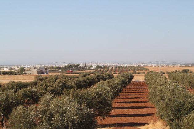 Blick vom Dach der Farm in Richtung at-Turra, syrische Grenze