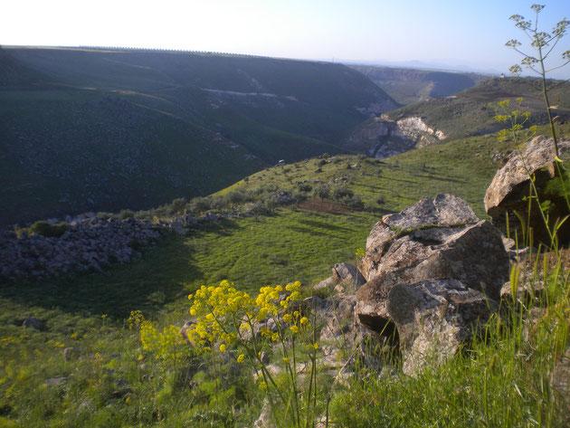 Der grüne Teil Jordaniens im Norden.
