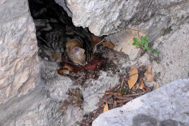 In diesen Verhältnissen leben die kroatischen Katzen.