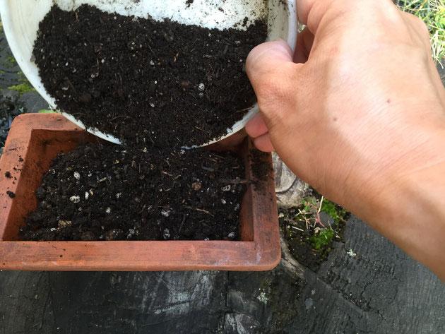 土を入れる。今回の土は、ちょっとふかふかにしたかったのでバークを追加した。